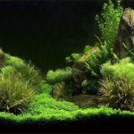 「初心者が意識するべき水草レイアウトのコツは?」元熱帯魚屋さんが答えるQ&A