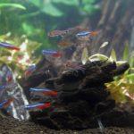 プロが厳選30種類!初心者におすすめの熱帯魚をスッキリ解説