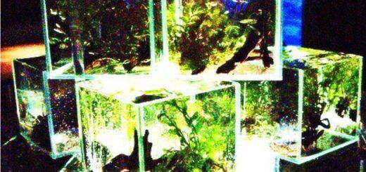 水槽 アクアリウム レイアウト