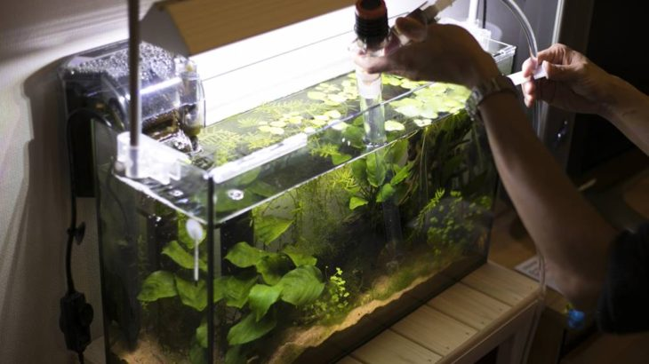今こそ始めたいアクアリウム!初心者向けの熱帯魚や水槽セットをやさしく解説