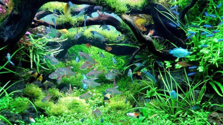 初めての熱帯魚どこで買う?初心者が選ぶべき熱帯魚屋さんをプロが解説!