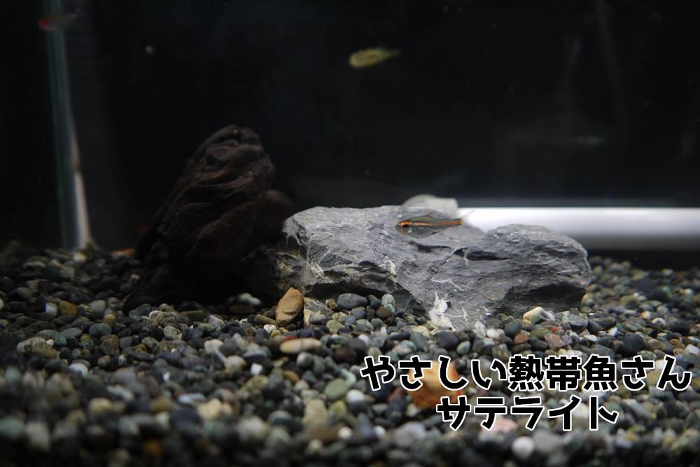 水作エイト 熱帯魚