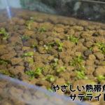熱帯魚水槽の底砂に「赤玉土」は使える?│プロが答えるQ&A