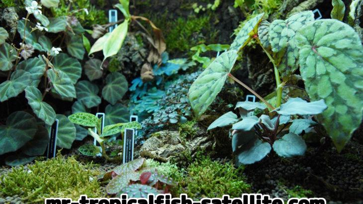 初心者でも大丈夫!パルダリウムで育てやすい植物を紹介!