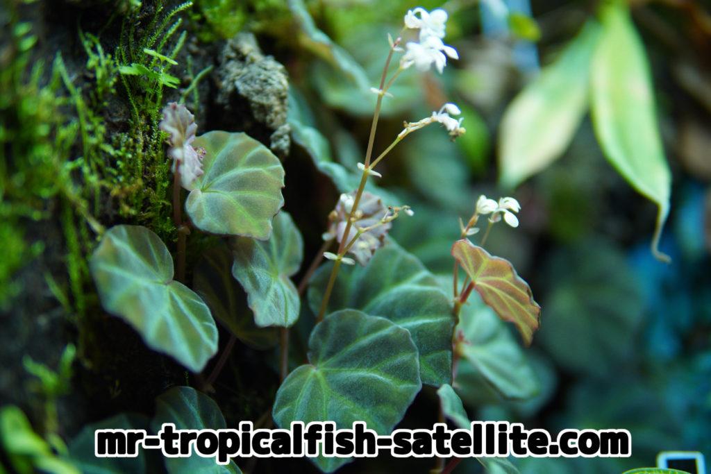 パルダリウム 植物